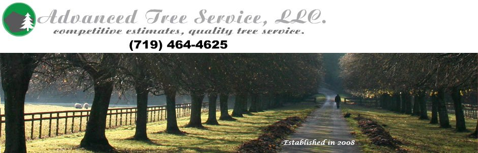 colorado tree service professionals